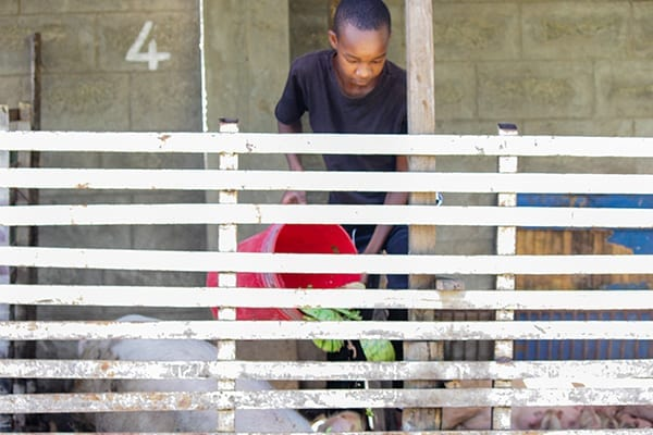 Pig Project: The new addition to the shamba is teaching students how to run a livestock entity.